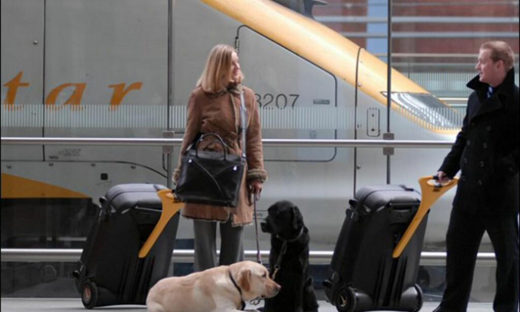 Eller hvis du har to hunder å holde styr på. Foto: LiveLuggage