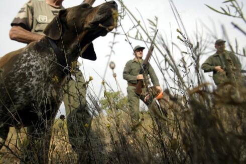 Ta med gutta på en spennende og testosteronfylt jakt. Illustrasjon: colourbox.com Foto: colourbox.com