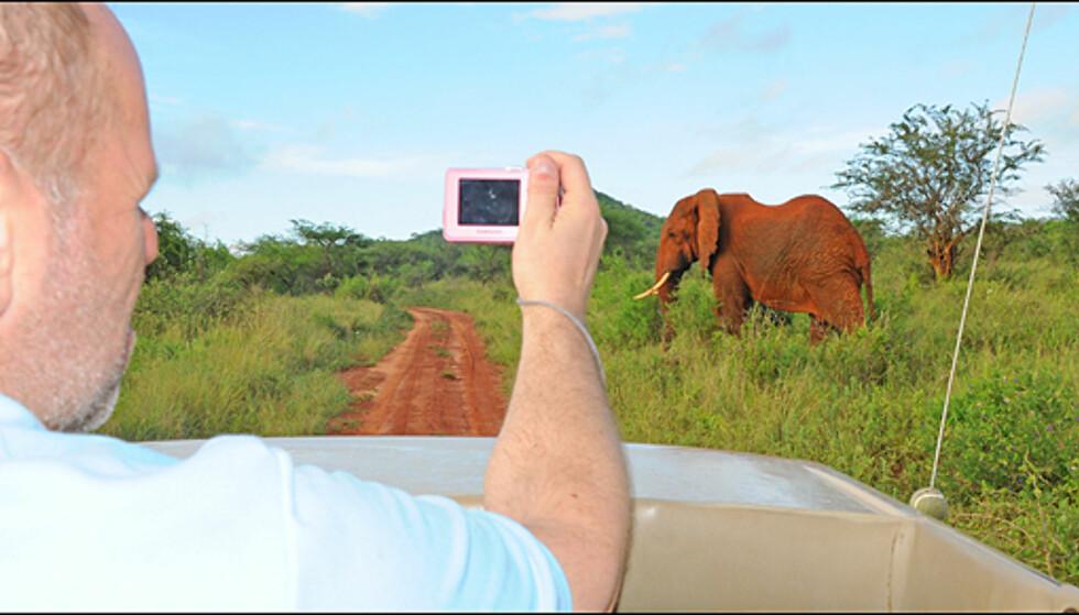 Safarien kan bli billig for deg om du reiser til Kenya i sommer. Både dollarkurs og stort frafall av turister taler for gode priser.