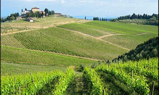 Det skal fremdeles være lov å gå en tur i vinmarken...