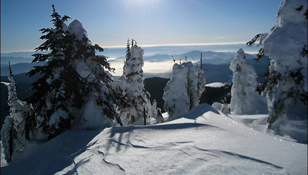 Vakkert vinterlandskap i British Columbia.Foto: Vebjørn Teigen Haugerud