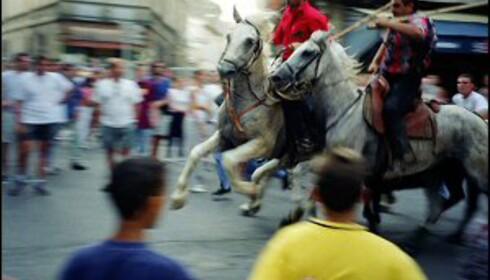 Hvite hester fra Camargue og cowboyshow i Arles. Foto: W. James