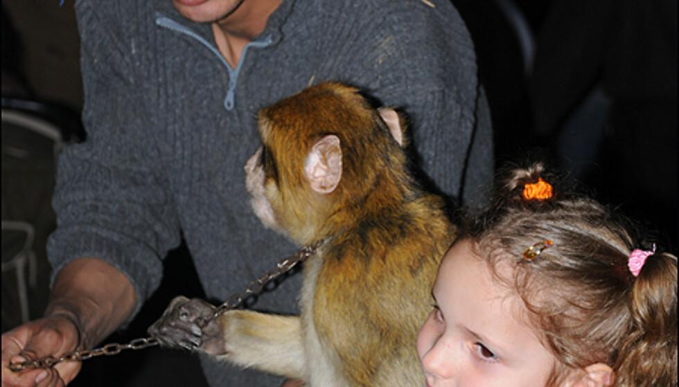 For litt penger kan du foreviges med en ape på armen. Her fra Djemaa el-Fna.