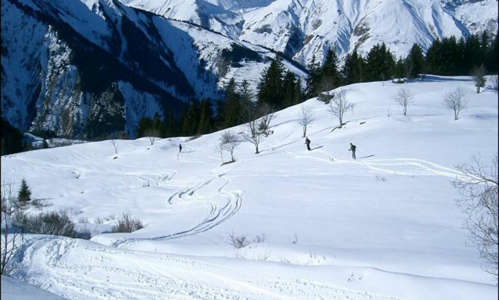 Vi er godt utenfor skikartet. Foto: Martin Hovden