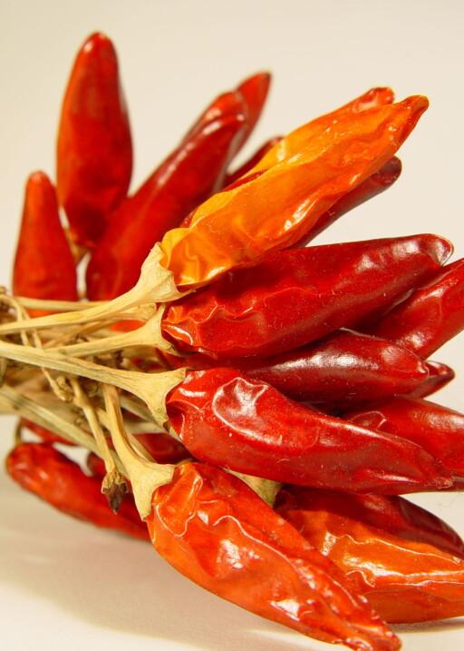 En habanero chili er 65 ganger sterkere enn vanlig Tabasco chili saus. Illustrasjonsfoto: colourbox.com Foto: Illustrasjonsfoto: colourbox.c