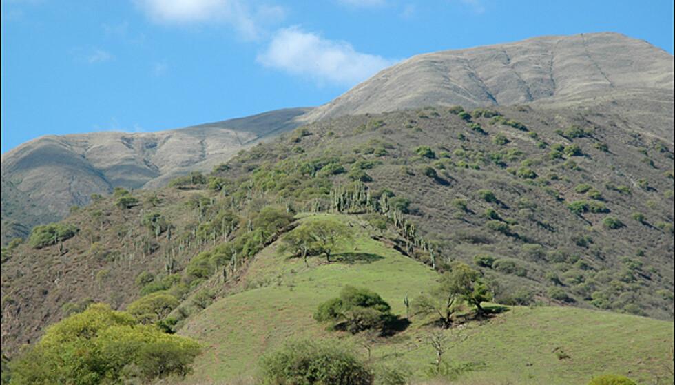 Noen steder minner fjellene mer om grønne steppeland.
