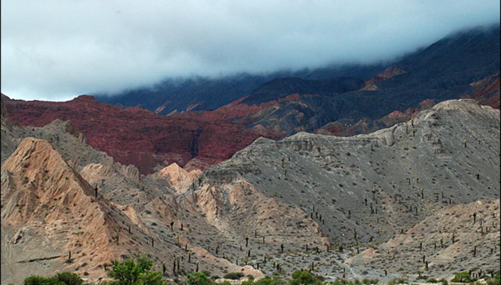 Kaktuser og farger er en stor del av landskapet.