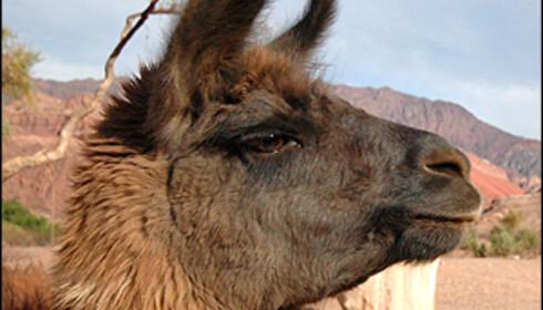 Møt flere lokale og se den vakre naturen fra argentinske Andes i bildeserien.