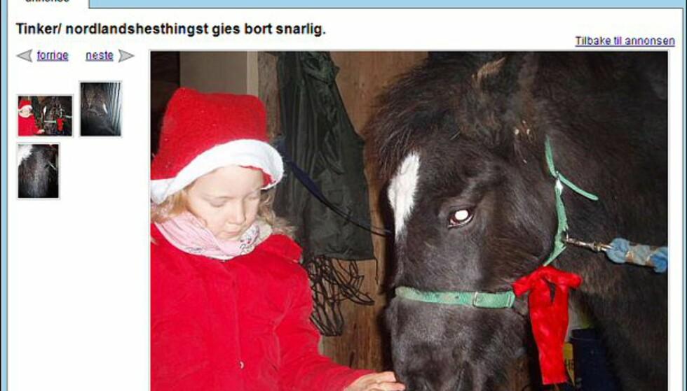 Hest er best, og denne skal visst være helt gratis... Faksimile fra: finn.no.