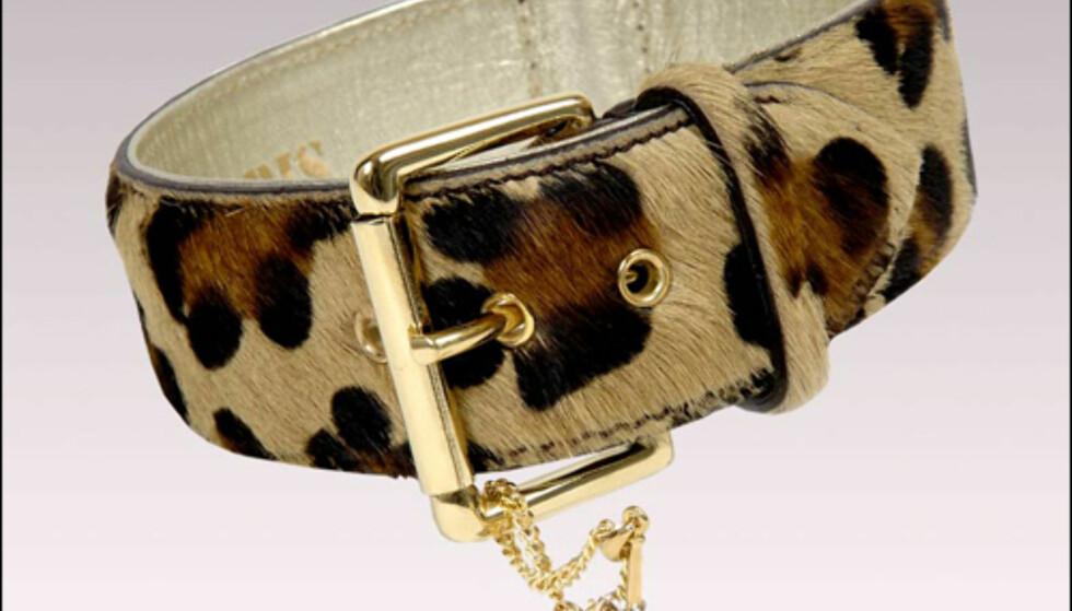 118 dollar for dette leopardhalsbåndet med hippe charms, også fra Dog in Paris.  Foto: Doginparis.com