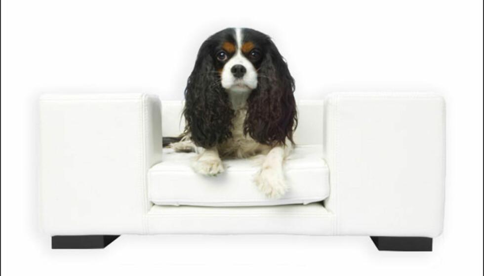 Alle som har, eller har hatt, hund vet at våte hunder bare elsker å slenge seg ut i lyse sofaer. Altså din sofa, ikke hundens egen sofa. Men man kan jo leve i håpet om at denne frister mer. Skinnsofaen fås kjøpt hos Pet Shop Girls i Oslo fra 4.498 kroner.  Foto: Pet Shop Girls