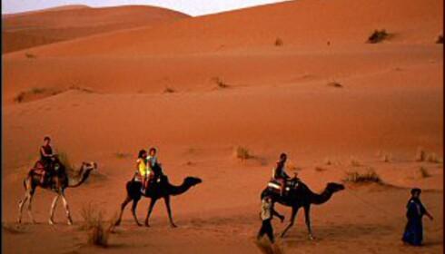 Se ørkenen fra kamelryggen. Foto: Vibeke Montero