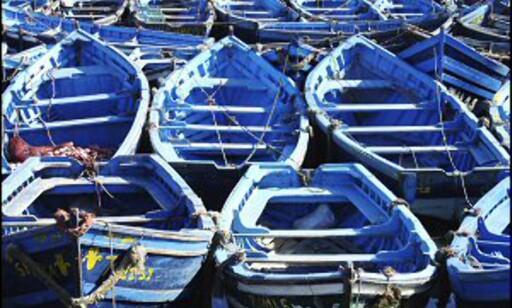 Vakre fiskebåter i Essaouria. Foto: Vibeke Montero