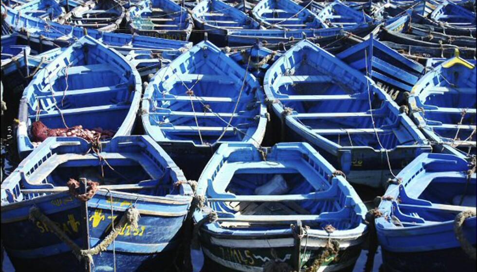 Ingen kameraer reiser fra Essaouira uten å ha fotografert de blå fiskebåtene. Foto: Vibeke Montero