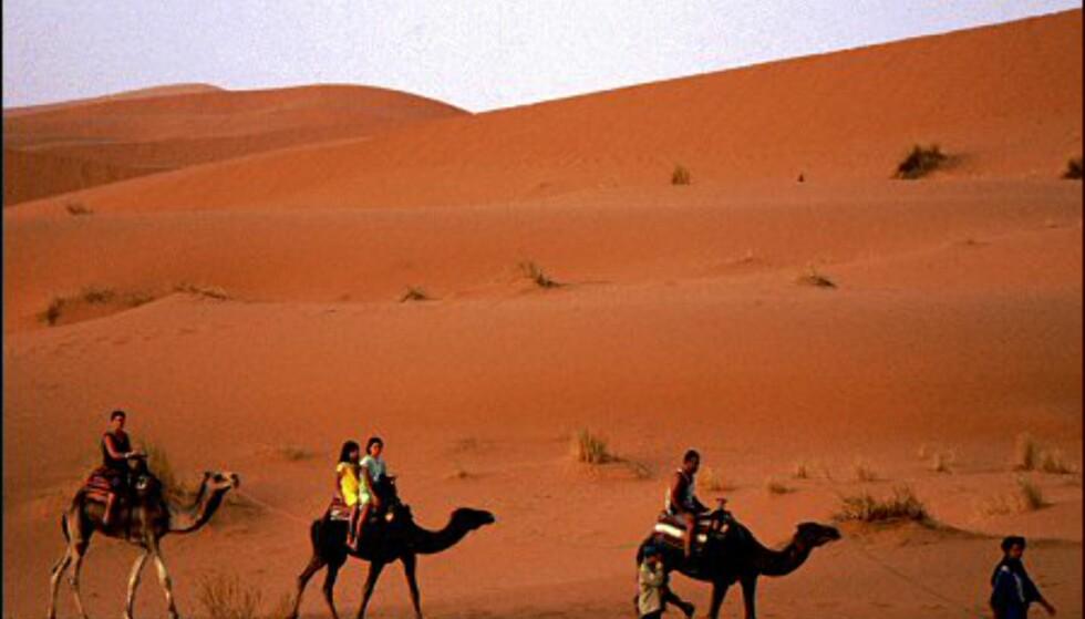 Å se soloppgangen fra kamelryggen er et minne for livet! Foto: Vibeke Montero