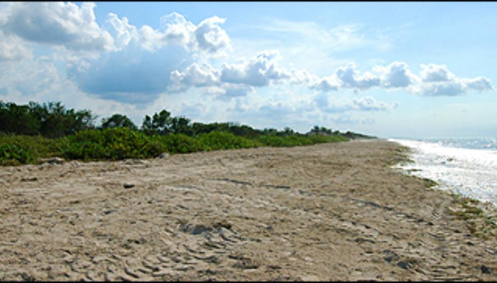 På denne stranden i delstaten Campeche bygges et utrolig prosjekt kalt Campeche Playa. Prisene for luksusleiligheter begynner på 1,7 millioner kroner. Foto: Hans Kristian Krogh-Hanssen
