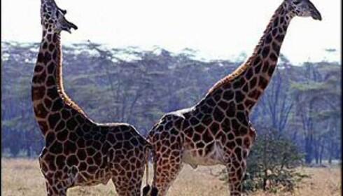 UD fraråder reiser til Kenya