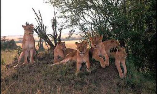Kunne du tenke deg å jobbe frivillig med dyr som disse? Å jobbe i dyrereservat er veldig populært.