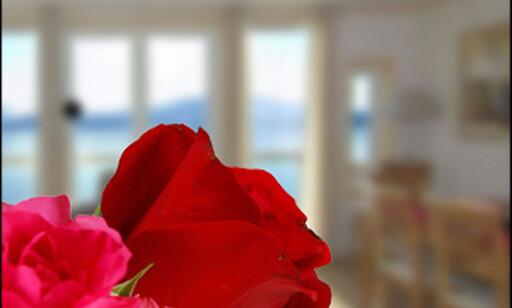 Hva er poenget med et bilde av en rose i et boligprospekt? Bilde: Per Ervland.
