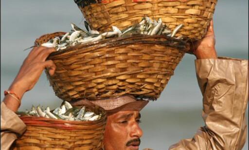 Livet som fisker er til tider slitsomt. Foto: Haakon F. Stenersen