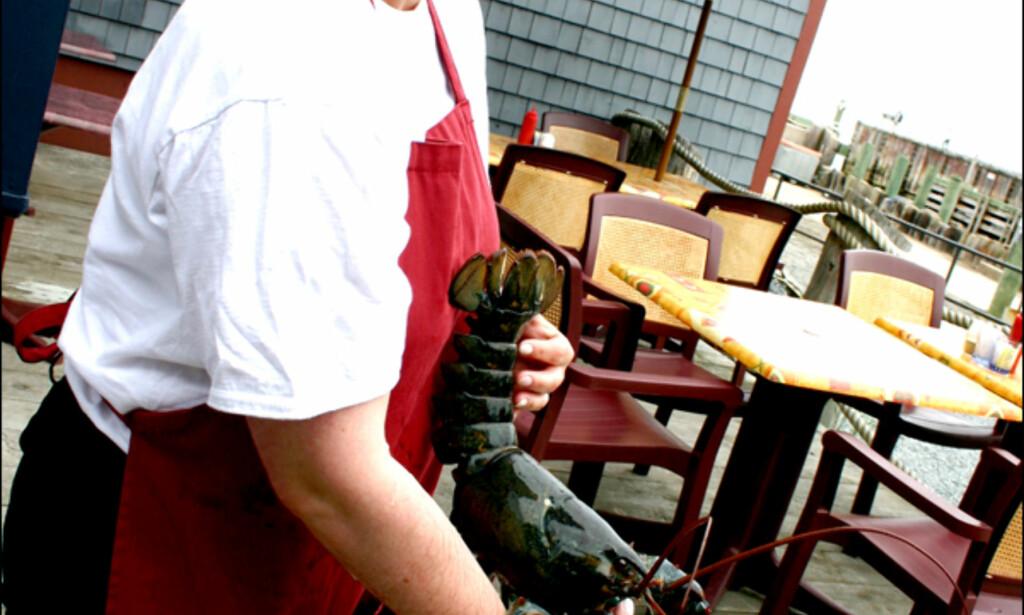 Nova Scotia og Halifax er kjent for å tilby deilig sjømat. Den største stjerne av dem alle er hummeren. I den lille byen Lunenburg tilbyr MacDonalds til og med hummerhamburgere. Krabaten på dette bildet veier intet mindre enn 2,5 kilo. Foto: Kim Jansson