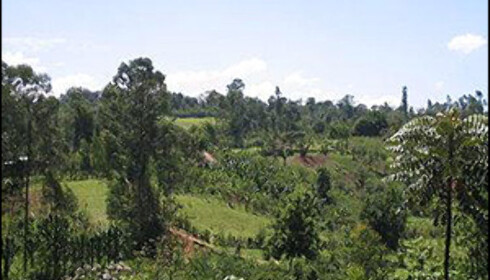 Tropisk skog i Yirgalem i Etiopia.