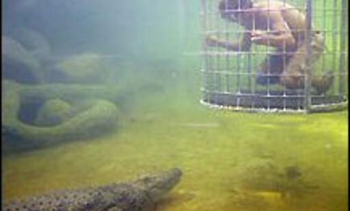 Tør du dette? Foto: Cango Wildlife Ranch