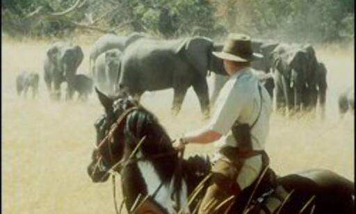 Kom ekstra tett på dyrene fra hesteryggen. Foto: African Horceback Safari