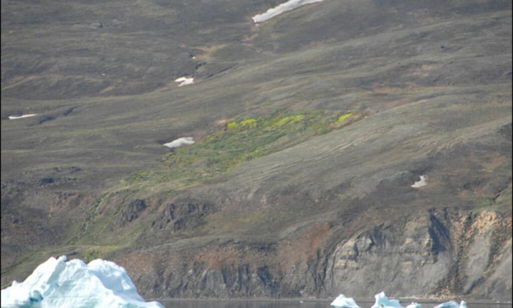 Enkelte steder på Disko kan man se biologiske tegn på at varmere vann kommer til overflaten. Foto: Lars Brubæk