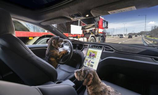 AUTONOM FREMTID: Det er nok noen år til hundene kan kjøre rundt i bilen din, men allikevel er utviklingen skremmende rask. FOTO: JAMIESON POTHECARY