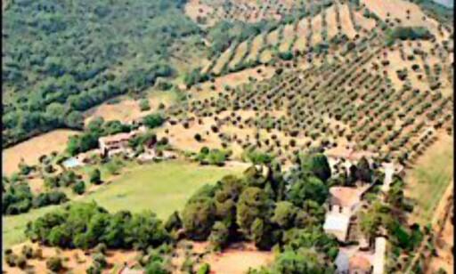 Vakkert vinlandskap i Italia. Foto: Villa di Monte Solare