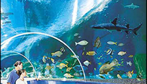 Fisker på alle kanter i Blue Reef Aquarium. Foto: Blue Reef Aquarium