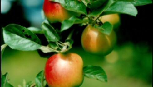 Fruktplukk deg rundt jorden. Foto: Joanna Kopik.  Foto: Joanna Kopik/kix