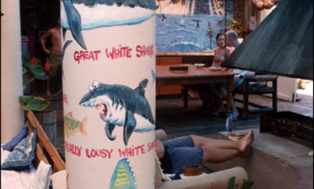 Se opp for hai - både Great White Shark, og Really Lousy White Shark.