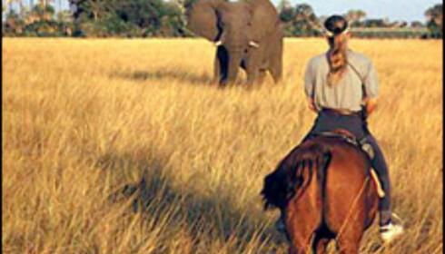 Safari på hesteryggen i Botswana.  Foto: Ride Worldwide