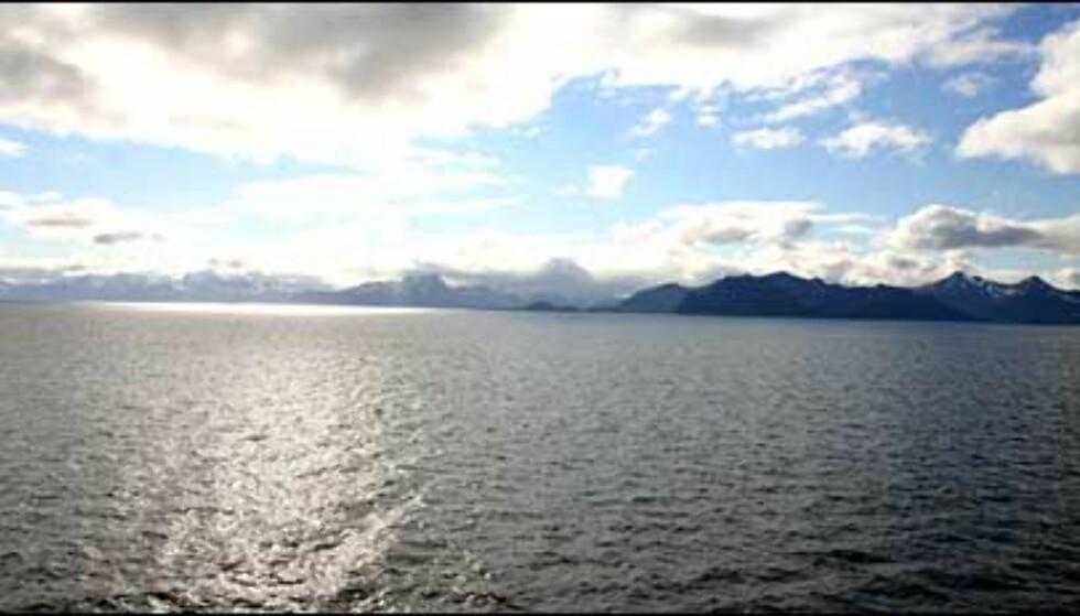 Lofotveggen møter oss i Vestfjorden.