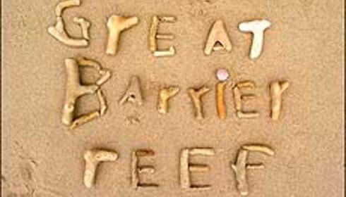 Korallrester på stranda. NB: Du kan gjerne skrive noe med dem, men ikke ta dem med vekk herfra! Foto: Sindre Storvoll