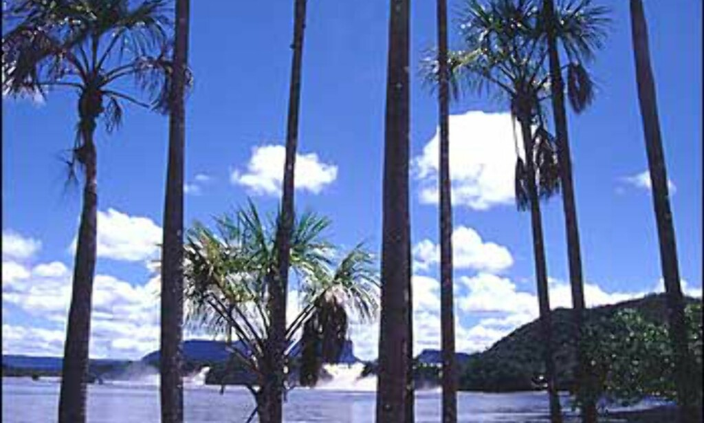 Det lille stedet Canaima ligger et stykke inn i Amazonas, og er startstedet for mange organiserte turer opp til Angel Falls. Canaima har en stor lagune der fem fosser munner ut, og er et sted der man virkelig kan oppleve harmoni.  Foto: Stian Mong
