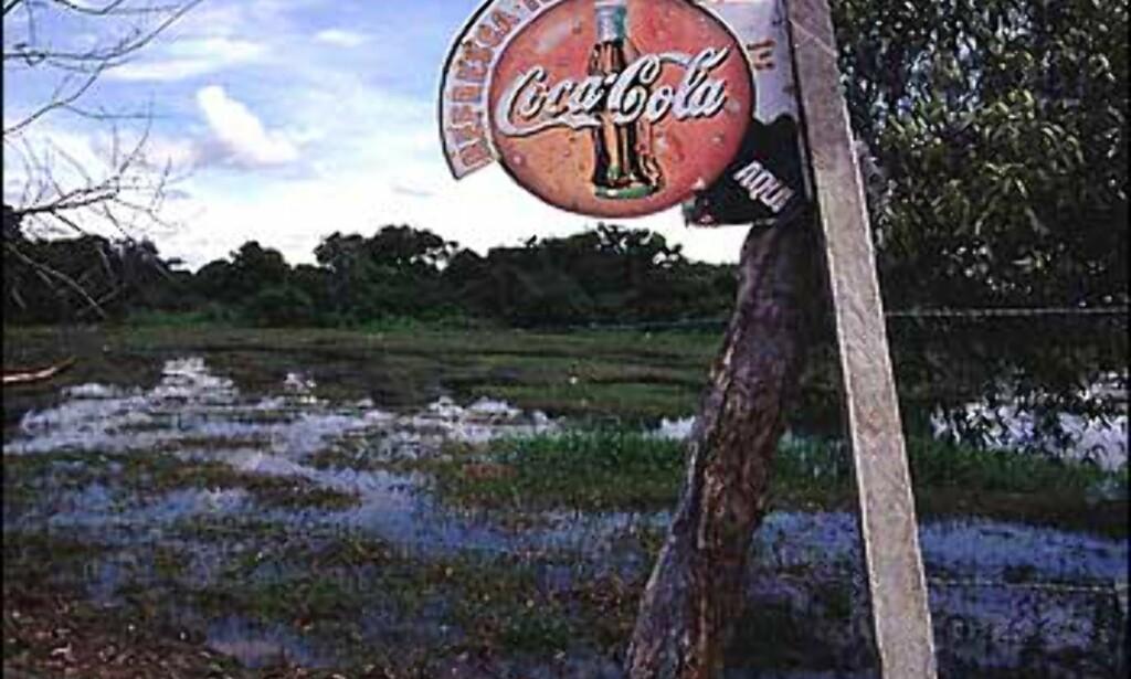 Øst for Andesfjellene i nord ligger Los Llanos, et flatt sletteland med et rikt dyre og fugleliv. Områdets storfeproduksjon sørger for at Venezuelas befolkning til enhver tid har tilgang på delikat kjøtt.  Det er også det området i Venezuela (utenom Amazonas) som er tynnest befolket.  Foto: Stian Mong