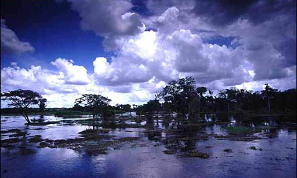 I regntiden (mai-november) er en del av slettelandet i Los Llanos oversvømmet. Dette er et godt utgangspunkt for f.eks krokodille-safari og pirajafisking.  Foto: Stian Mong