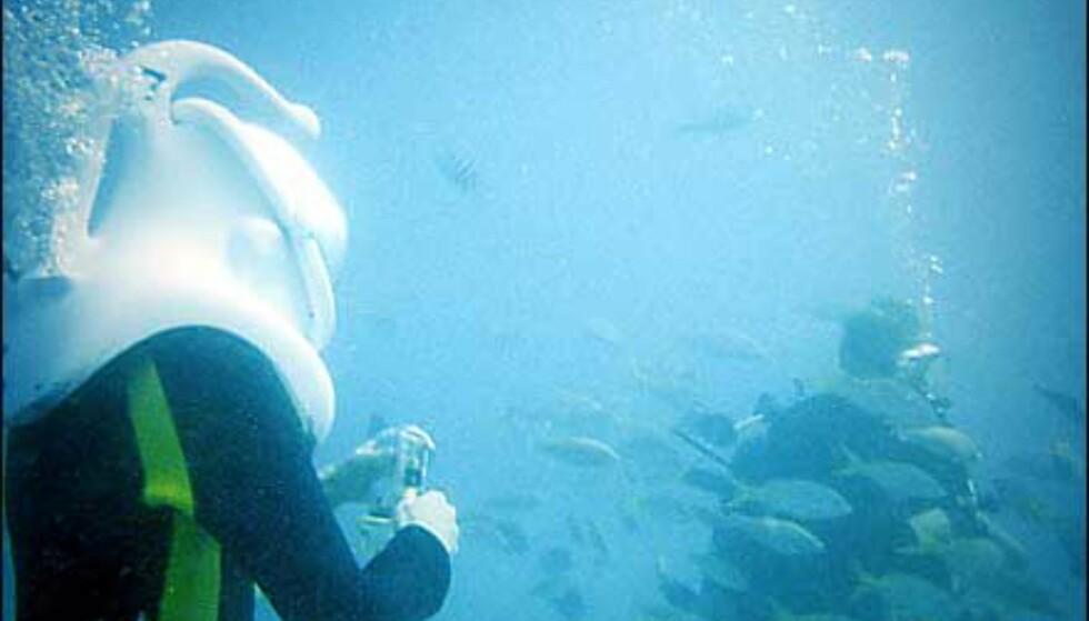 Sea Trek: Hjelmen holder deg nede. Du får luft gjennom en slange, og slipper ut overskudd gjennom ventiler bak. Dykkere er med hele veien.
