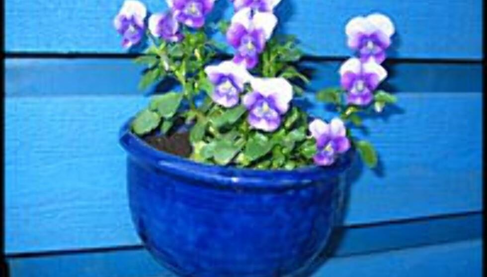 Blomster gir liv til uteplassen.