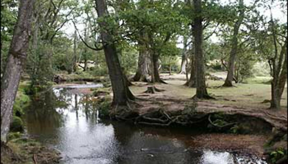 Lewis Caroll fant inspirasjon til Alice in Wonderland i eventyrskogen New Forest. Foto: Stine Okkelmo