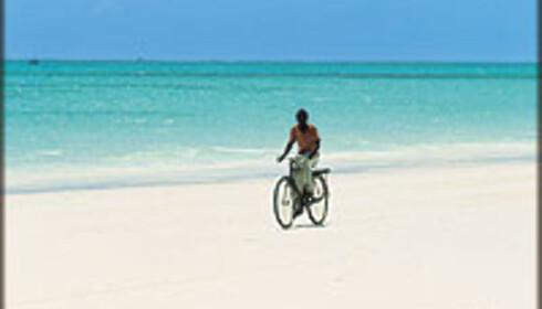 Zanzibar i ferien? Eller kanskje Tahiti?  Foto: Øien, Murstad og Johansen