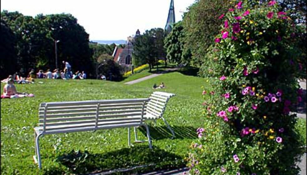 Stensparken i sommerskrud. Fagerborg Kirke til høyre.