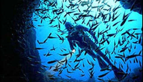 Undervannsdrøm. Foto: Grahame McConnell - Lord Howe Island Tourism, Courtesy Tourism New South Wales Foto: Grahame McConnell - Lord Howe Island Tourism, Courtesy Tourism New South Wales