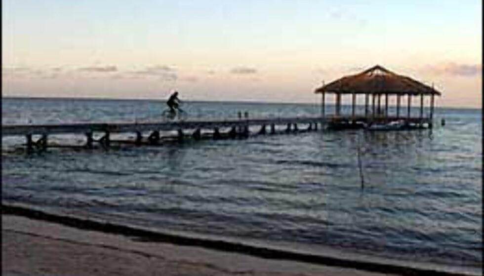 Roatan er kjent for både strender og dykkemuligheter. Foto: Palmetto Bay Plantation Foto: Palmetto Bay Plantation