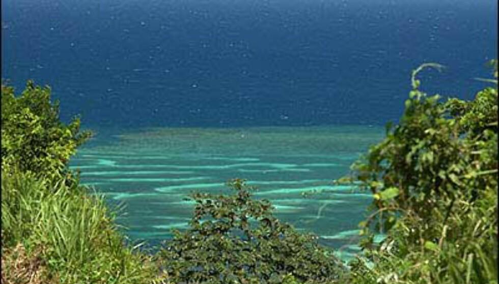 Korallrevene utenfor Roatan er av verdens største. Foto: Palmetto Bay Plantation Foto: Palmetto Bay Plantation