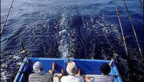 Utenfor Mersing i Malaysia finner vi Robinsonparadisene. Men det frister kanskje mer å dykke eller drive havfiske i dette vakre kystområdet? Foto: Malaysian Tourism Foto: Malaysian Tourism