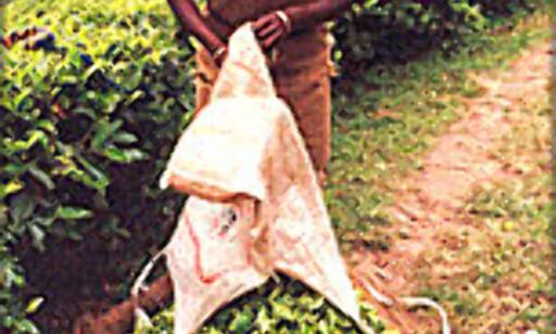 India er mer enn teplantasjer og spinnerier. Landets IT kunnsaper kan kanskje være gull verdt for din bedrift?